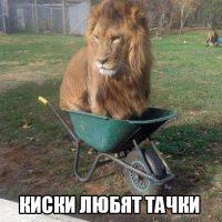 Смешные картинки про животных с надписями - веселая подборка №64 16