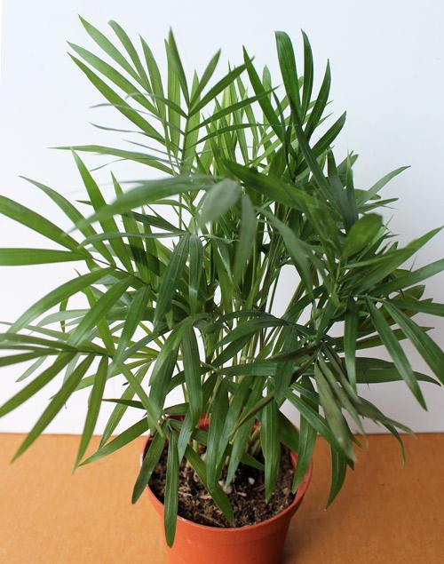 7 лучших комнатных растений для очищения воздуха в помещении 2