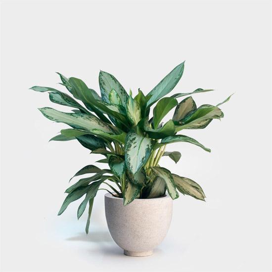 7 лучших комнатных растений для очищения воздуха в помещении 5