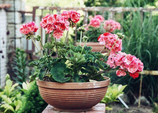 7 лучших комнатных растений для очищения воздуха в помещении 6