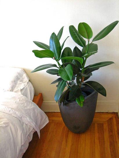 7 лучших комнатных растений для очищения воздуха в помещении 7