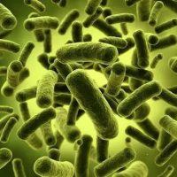 Где больше всего микробов Какие предметы более заражены микробами 1