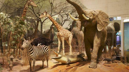 Дарвиновский музей что интересного, на что посмотреть 3