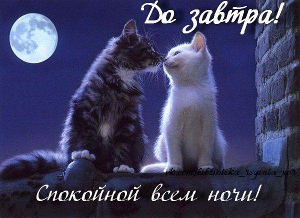 Доброго вечера и спокойной ночи - красивые картинки и открытки 12