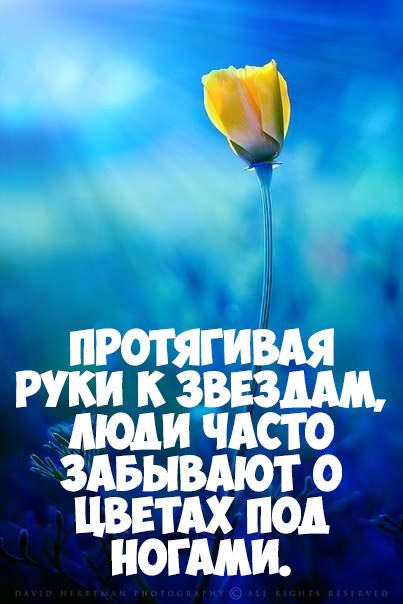 Интересные и красивые цитаты про цветы, растения - подборка 1
