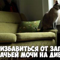 Как избавиться от запаха кошачьей мочи на диване - народные советы 1