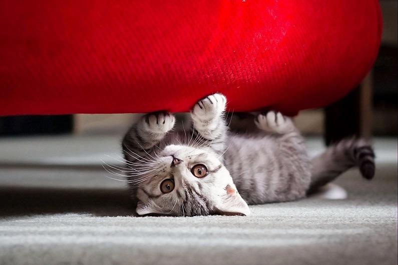 Как избавиться от запаха кошачьей мочи на диване - народные советы 2