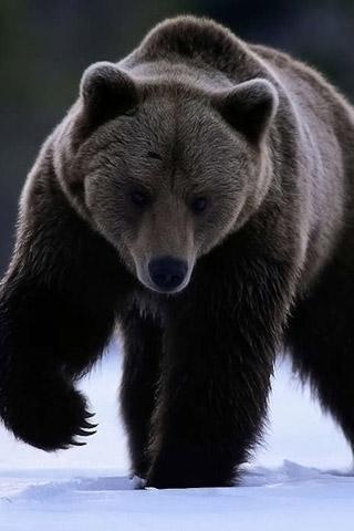 Картинки на телефон медведи, аватарки с медведями - подборка 1