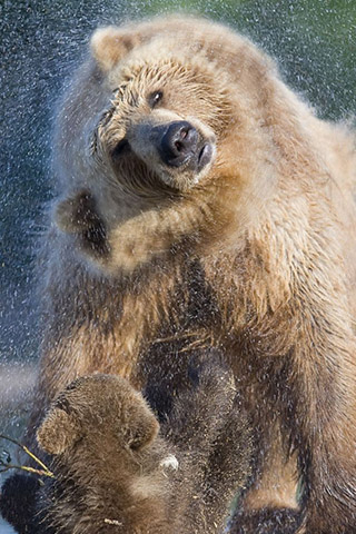 Картинки на телефон медведи, аватарки с медведями - подборка 3