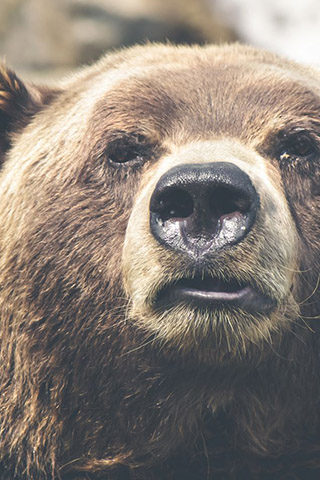 Картинки на телефон медведи, аватарки с медведями - подборка 4