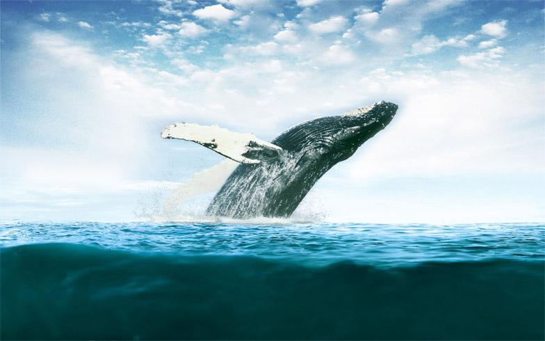 Киты - фотографии китов. Удивительные и красивые фото китов 13