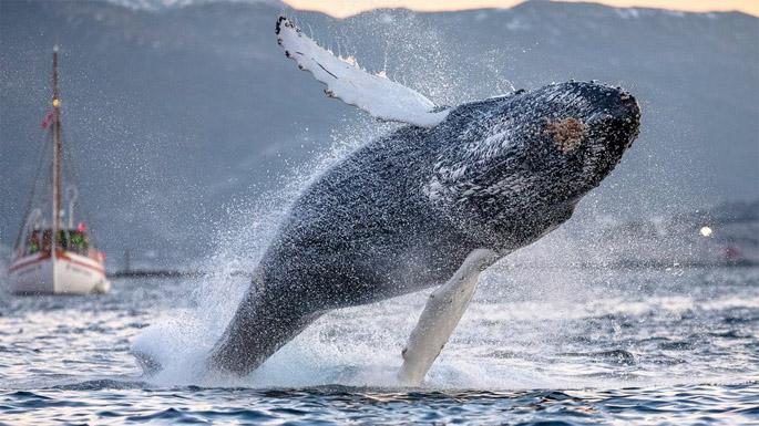 Киты - фотографии китов. Удивительные и красивые фото китов 5