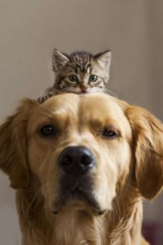 Классные и прикольные картинки, фото собак, щенков на телефон - подборка 1