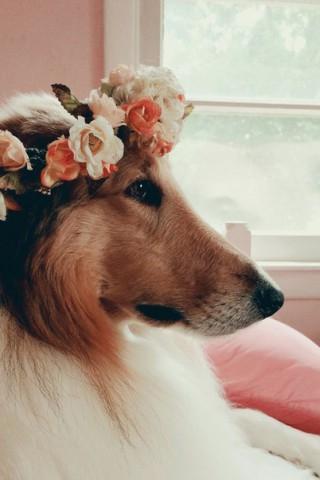 Классные и прикольные картинки, фото собак, щенков на телефон - подборка 10