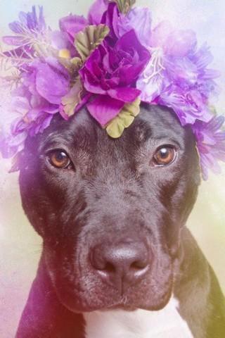 Классные и прикольные картинки, фото собак, щенков на телефон - подборка 13
