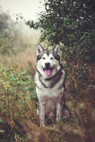 Классные и прикольные картинки, фото собак, щенков на телефон - подборка 16