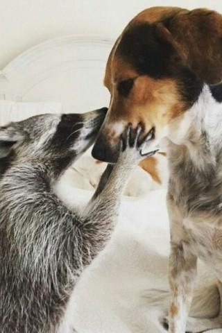 Классные и прикольные картинки, фото собак, щенков на телефон - подборка 2