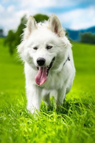 Классные и прикольные картинки, фото собак, щенков на телефон - подборка 4