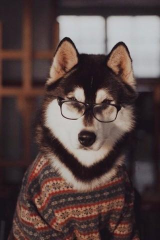 Классные и прикольные картинки, фото собак, щенков на телефон - подборка 8