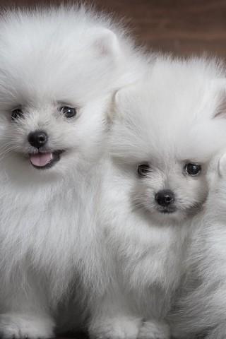 Классные и прикольные картинки, фото собак, щенков на телефон - подборка 9