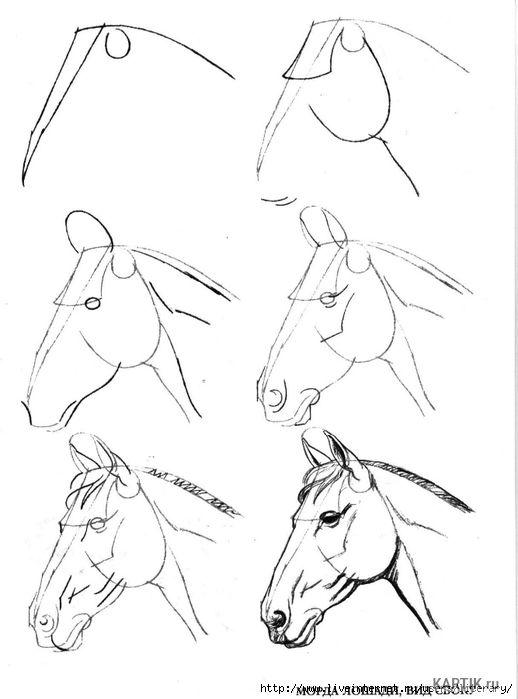 Красивые картинки для срисовки карандашом лошади или пони 18