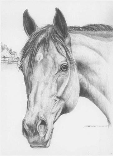 Красивые картинки для срисовки карандашом лошади или пони 25
