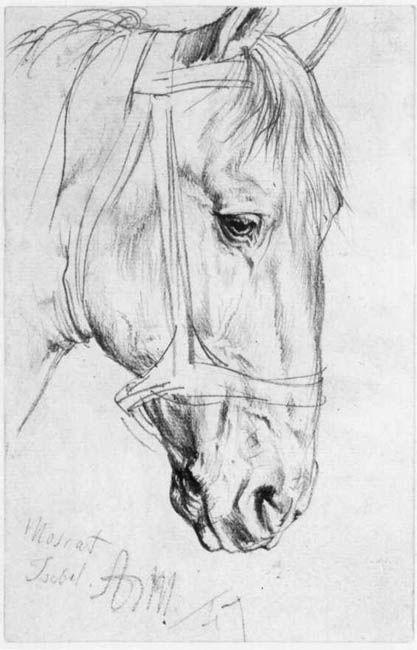 Красивые картинки для срисовки карандашом лошади или пони 26