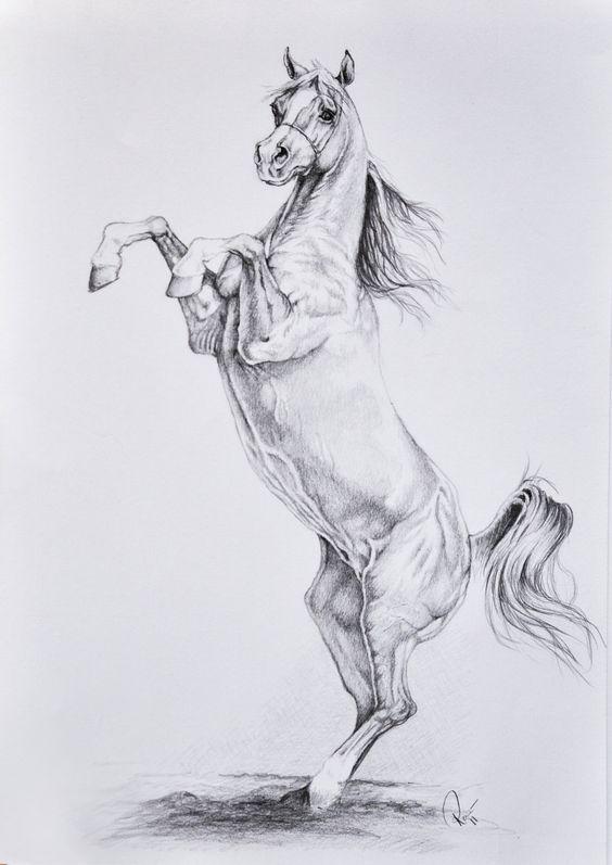 Красивые картинки для срисовки карандашом лошади или пони 4
