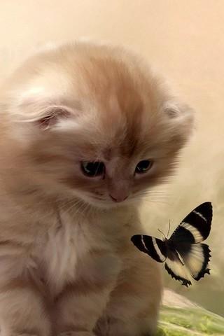 Красивые картинки котиков и кошек на заставку телефона - подборка 14