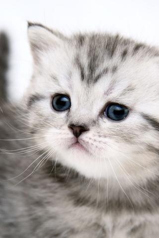 Красивые картинки котиков и кошек на заставку телефона - подборка 15