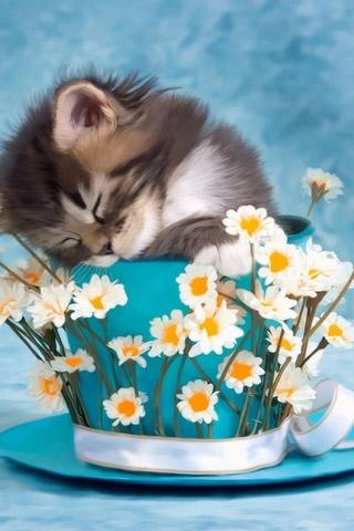 Красивые картинки котиков и кошек на заставку телефона - подборка 18