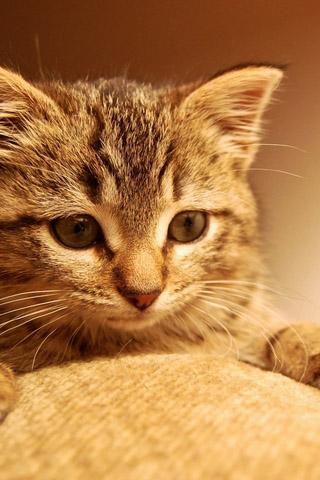 Красивые картинки котиков и кошек на заставку телефона - подборка 2