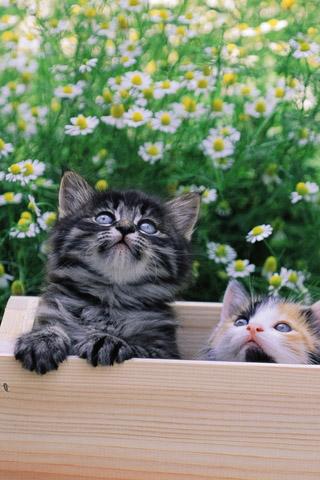 Красивые картинки котиков и кошек на заставку телефона - подборка 25