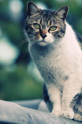 Красивые картинки котиков и кошек на заставку телефона - подборка 27