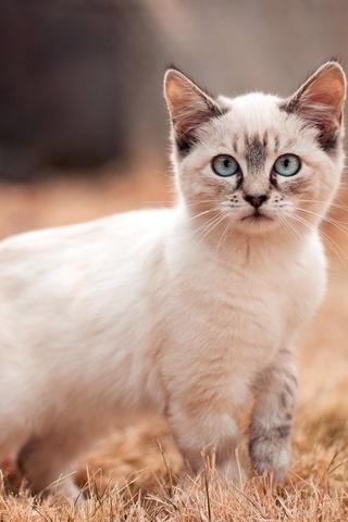 Красивые картинки котиков и кошек на заставку телефона - подборка 3