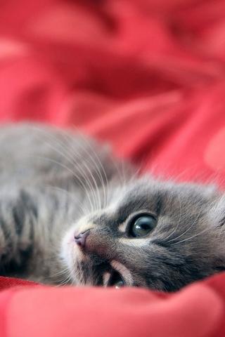 Красивые картинки котиков и кошек на заставку телефона - подборка 5