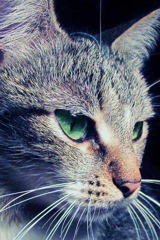 Красивые картинки котиков и кошек на заставку телефона - подборка 6