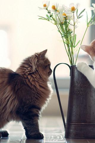 Красивые картинки котиков и кошек на заставку телефона - подборка 9