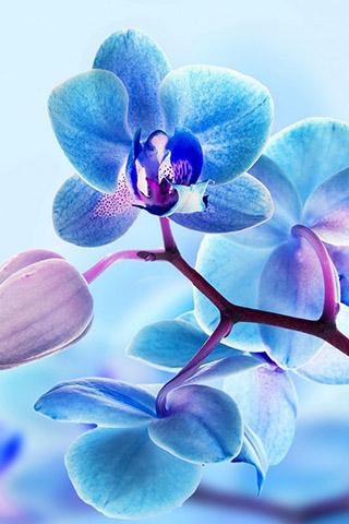 Орхидеи красивые картинки на телефон на заставку - подборка 20 фото 14