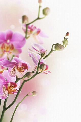 Орхидеи красивые картинки на телефон на заставку - подборка 20 фото 15