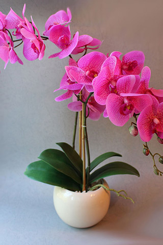Орхидеи красивые картинки на телефон на заставку - подборка 20 фото 16