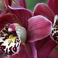 Орхидеи красивые картинки на телефон на заставку - подборка 20 фото 18