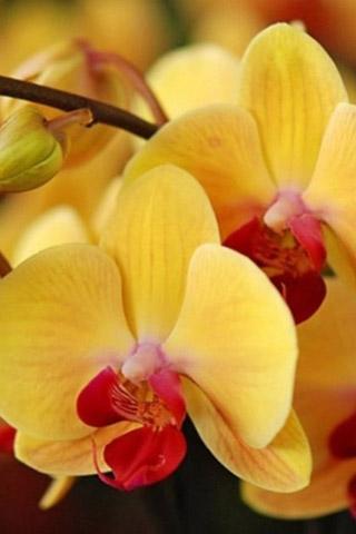 Орхидеи красивые картинки на телефон на заставку - подборка 20 фото 19