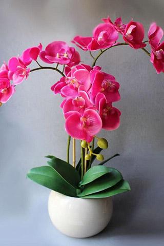 Орхидеи красивые картинки на телефон на заставку - подборка 20 фото 2