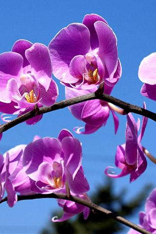 Орхидеи красивые картинки на телефон на заставку - подборка 20 фото 4