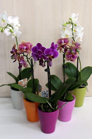 Орхидеи красивые картинки на телефон на заставку - подборка 20 фото 8