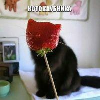 Очень забавные и угарные картинки про животных - сборка №72 13