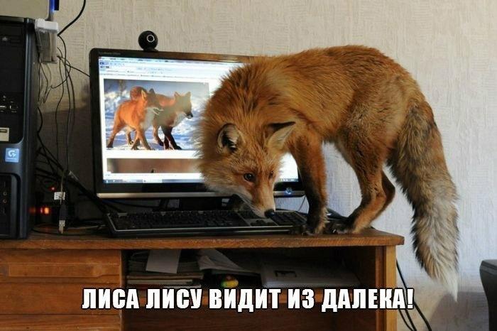 Очень забавные и угарные картинки про животных - сборка №72 8