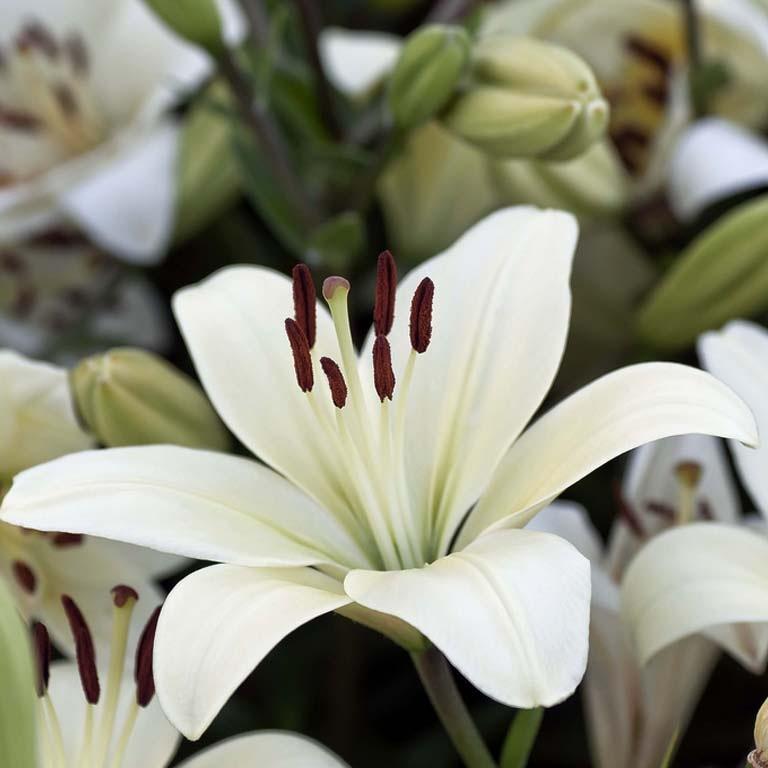 Очень красивые и прекрасные картинки, фото Белая лилия - подборка 12