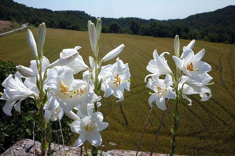 Очень красивые и прекрасные картинки, фото Белая лилия - подборка 9